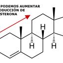 Como podemos aumentar la producción de testosterona