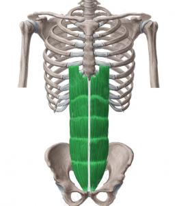 descanso abdominales-recto