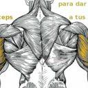 Trabajar los tríceps para dar volumen a tus brazos